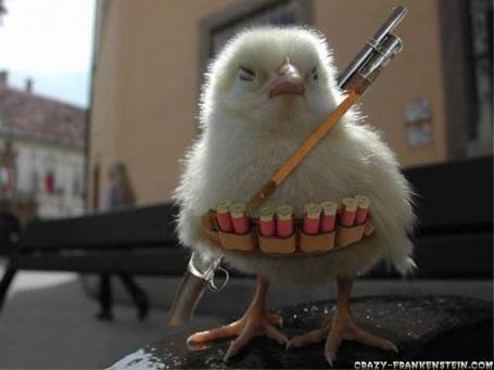 Aussie Survivor_chick0
