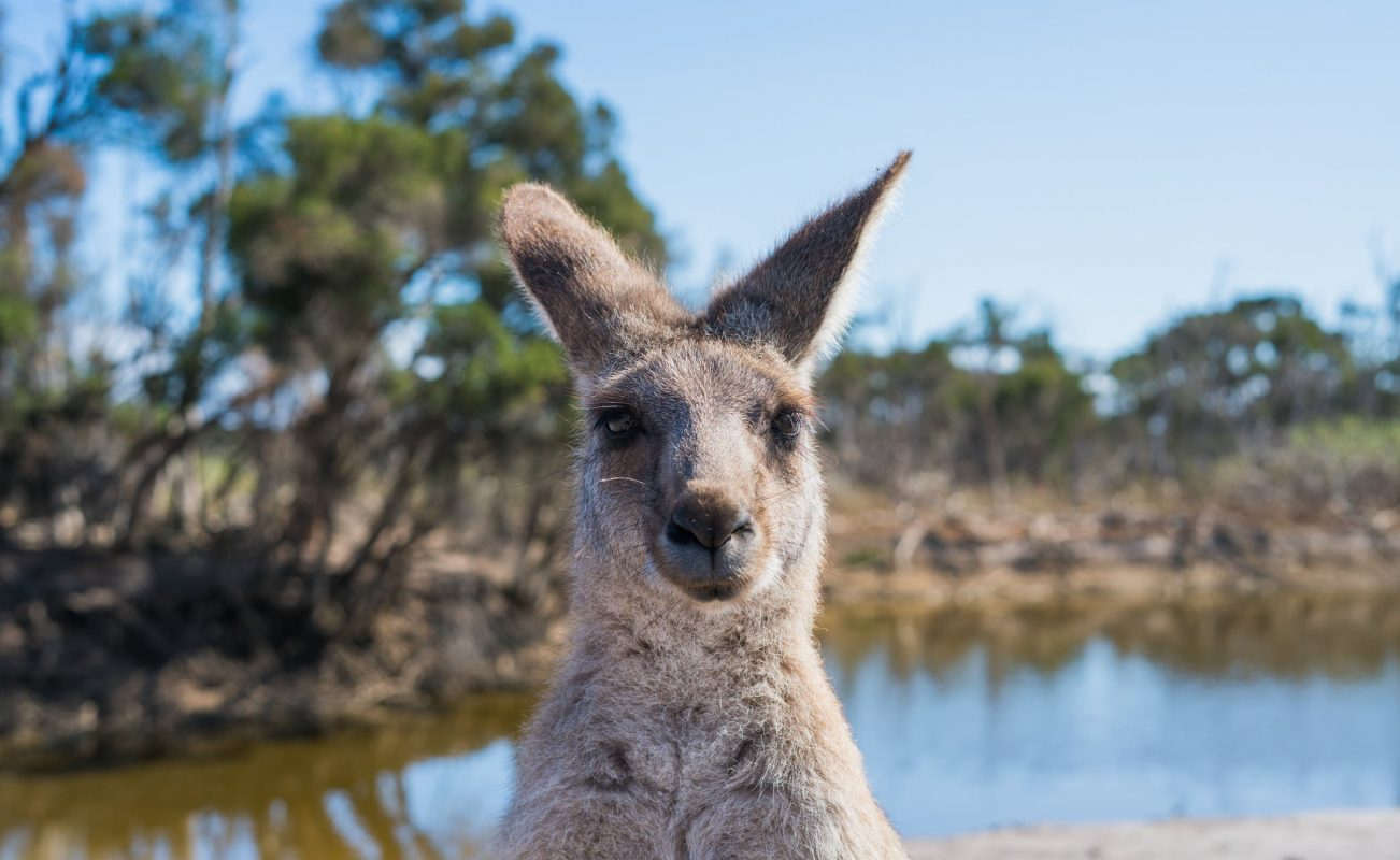 Tips On Packing Australian Survival Foods