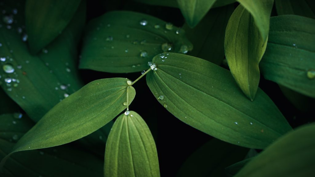 Medicinal Plants Backpackers Should Know