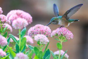 A Few Words In Praise of Birds